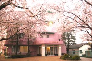 病院のまわりは桜がみごとに咲きます。